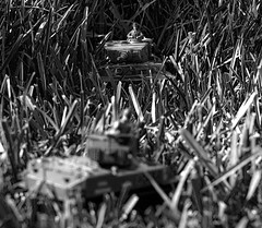 Beware the Tiger in the Tall Grass (Tom Haymes) Tags: toys miniature tank worldwarii panzer tigertank stuarttank