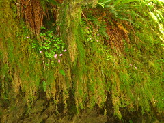 Hanging Moss & Wild Flowers (Sandy's Candy) Tags: pink flowers light brown green nature beautiful moss vegetation wildflowers beautifulcapture godsartwork naturephotographs wowiekazowie greenalicious driftcreekpark sandyscandy