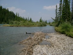 Bow River in Canmore #2