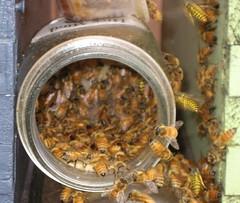 Beekeeping 2706