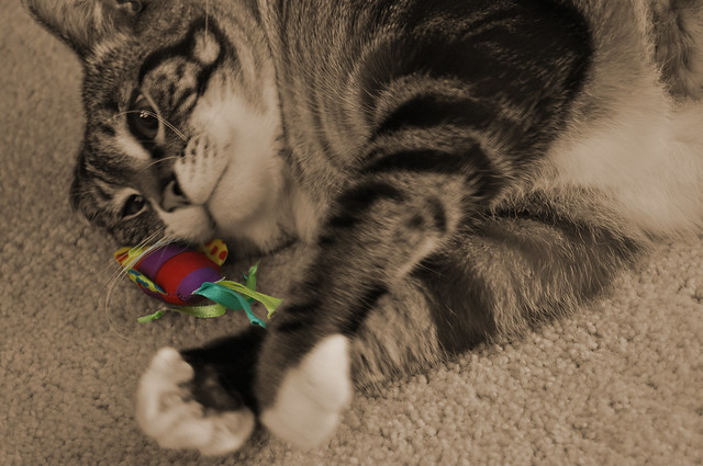Spicy with colorful toy