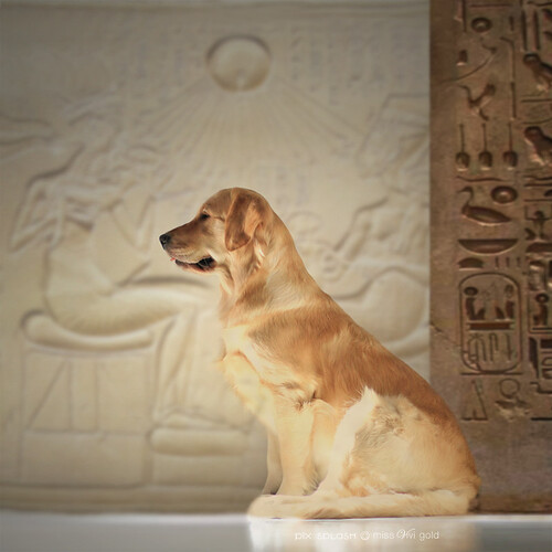 Posed Like A Gold Statue In An Egyptian Palace