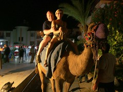 Double Hump !! (Taracy) Tags: turkey side camel taracy