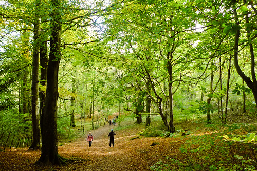 Beautiful woodland walks