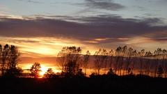 Quand l'amour colore la vie. When love color the life. (Amiela40) Tags: sunset rose jaune rouge searchthebest couleurs bleu arbres amour coucherdesoleil