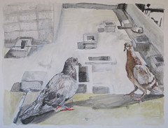 (Hava Matzkin Eilam Art) Tags: urban art nature ink drawing dove pigeons air portfolio hava eilam  matzkin