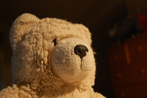 Mr. Bear meets new camera