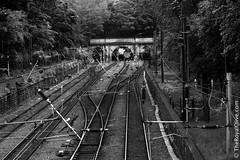 Edinburgh 057 (Royal Olive) Tags: uk bridge bw white black station train scotland edinburgh europe track european united union tracks eu kingdom connection waverley