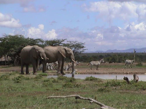 SW Elephants with Zebras
