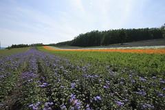 IRODORI Field