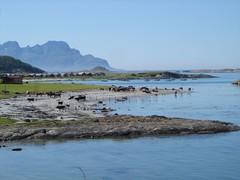 cows at the waterfront (strandmona) Tags: sea norway cows fjre landegode kjerringy