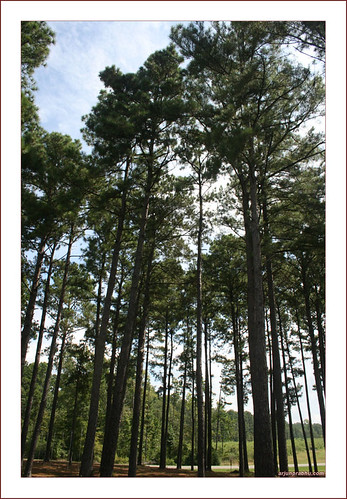 Woods at Wildwood Resort - Toledo Bend