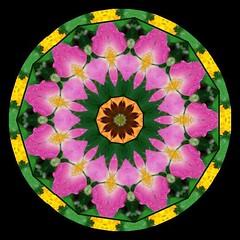 Flower Kaleidoscope 1 (klmontgomery) Tags: kaleidoscope september only 2007 klmonty kaleidoscopesonly minikaleids klmontgomery