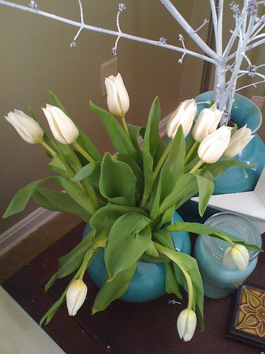 Tulips from the neighbor