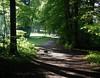 große Erwartungen - auf der Suche nach Erlösung (AnnAbulf) Tags: bw verde alberi licht grün sentiero wald bäume luce lichtenstein bosco pfad badenwürttemberg schwäbischealb württemberg honau lichteinfall schloslichtenstein