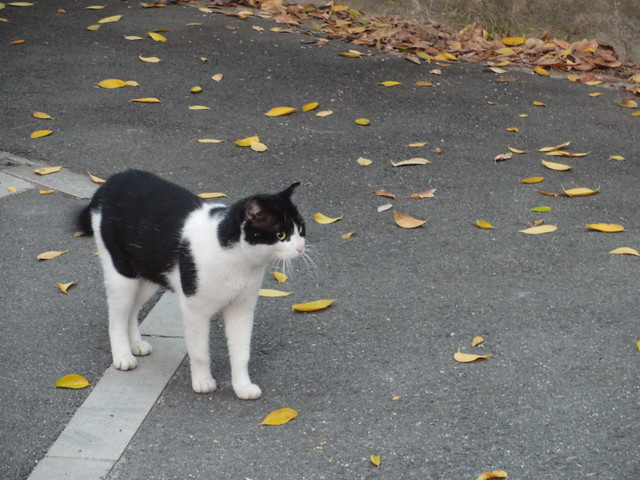 Today's Cat@2010-11-15