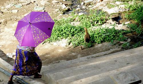violet umbrella, luang prabang