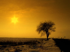 elements (Harlory) Tags: winter light sunset sun tree silhouette yellow star nikon photos romania excellent coolpix craiova olt p100 slatina explored nikonp100