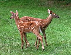bookends (deerluvr) Tags: animalkingdomelite