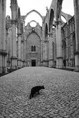 O gato preto (the bbp) Tags: bw portugal blackcat lisboa bn lisbona igrejadocarmo blueribbonwinner gatopreto gattonero thecontinuum thebbp mywinners abigfave aplusphoto