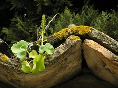 teja y planta (qvark) Tags: baeza teja humedad