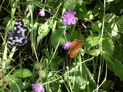 Two butterflies grazing (Freebird_) Tags: butterflies grazing