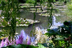 Giverny Monet Garden: waterplants  42.210.01