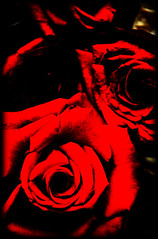 (She was here) Tags: life red roses flower color love photography nikon flickr photos explore frontpage
