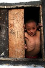 Window looking sikkimees boy