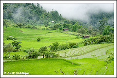 The Green Town 02 - Ukhrul ( Manipur, India) (Arif Siddiqui) Tags: india landscapes places ilp tribes northeast arif arunachal kohima nagaland manipur tribals siddiqui jairampur favoritegarden top30green ukhrul