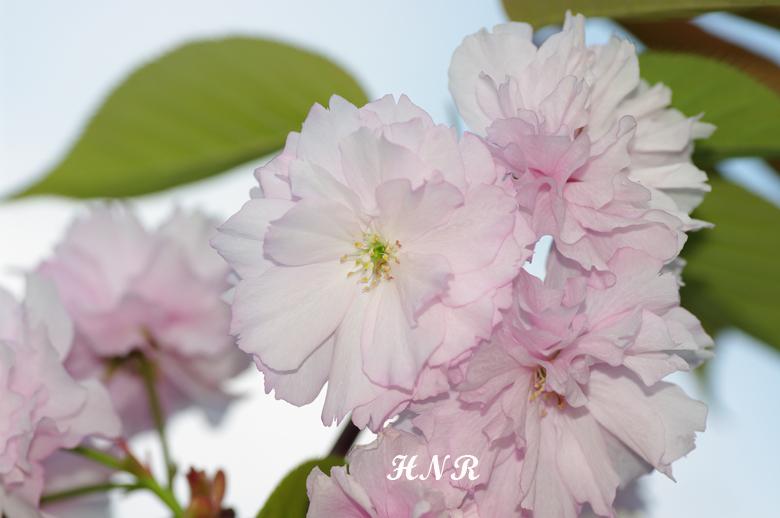 KMTN9039-b