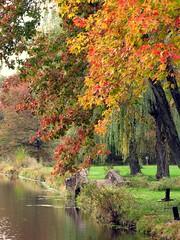 Autumn Leaves (Loci Lenar) Tags: park new bridge autumn trees news leaves landscape photography pond media colorful image rss nj images blogs photoblog bloglines feed feeds morriscounty hardingtownship baynepark baynepond