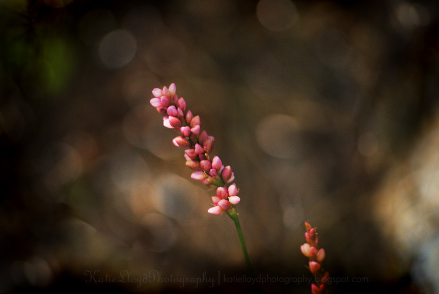 Pink-flower-with-bokeh