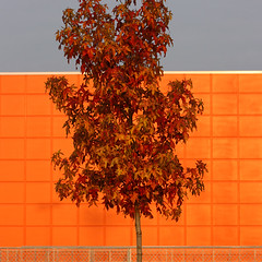 sunset (_robocop) Tags: blue sunset red orange color tree delete10 delete9 delete5 grey delete2 uniform delete6 delete7 delete8 delete3 delete delete4 save deletedbydeletemeuncensored