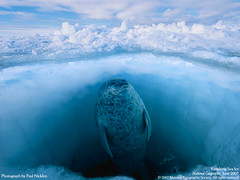 wallpaper_Vanishing Sea Ice