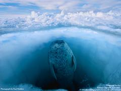 wallpaper_Vanishing Sea Ice