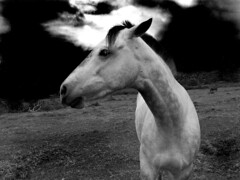 Free (maggiedeephotographer) Tags: sky blackandwhite horse field clouds outdoors cheval explore whitehorse anawesomeshot maggiedee