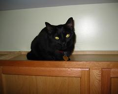 cat kitchen accessories