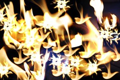 fire bouquet , the doves burn away the evil you (tofu_minx) Tags: orange yellow fire hope sad burn angry doves instantfav