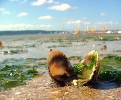 Beach Shell - Brest, Brittany, France - Monday  July 30th 2007 (law_keven) Tags: ocean france seaweed beach water sand brittany dof atlantic brest atlanticocean explore500 superaplus aplusphoto superbmasterpiece diamondclassphotographer flickerdiamond theunforgetablepictures finistaire