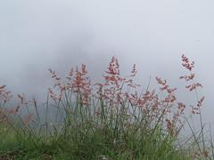 mist ooty