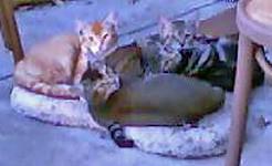 Kittens 8-14-07