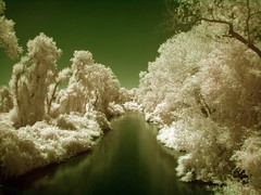 Snow Creek (King Woodrose) Tags: california trees color reflection tree water creek river sony cybershot best explore infrared sacramento colorinfrared yourfavorites h7 colorir dsch7