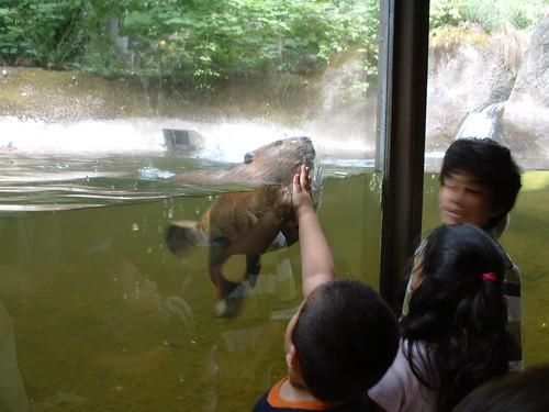 Zoo Beaver