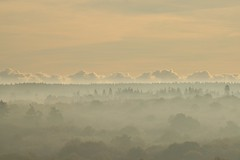 Misty Hills (Kalahari Gemsbok) Tags: uk trees mist nature misty forest landscape nikon scenery d70 britain scenic animalplanet britishwildlife paewildlifephotos