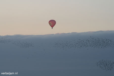 Birds and Balloon