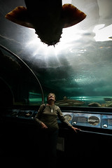 Mother meets shark (Lil [Kristen Elsby]) Tags: fish water aquarium shark tank sydney mother australia wideangle tunnel mum parent getty darlingharbour topv11111 topf100 gettyimages australasia oceania sydneyaquarium wobbegong wobbegongshark gettyimagesonflickr