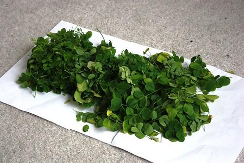 Moringa harvest1