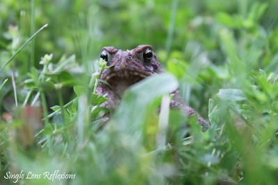 Hello, Toad!