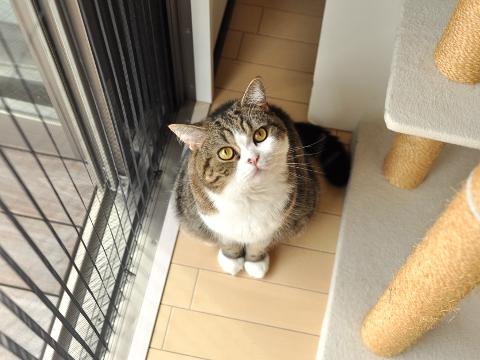 cute maru the cat